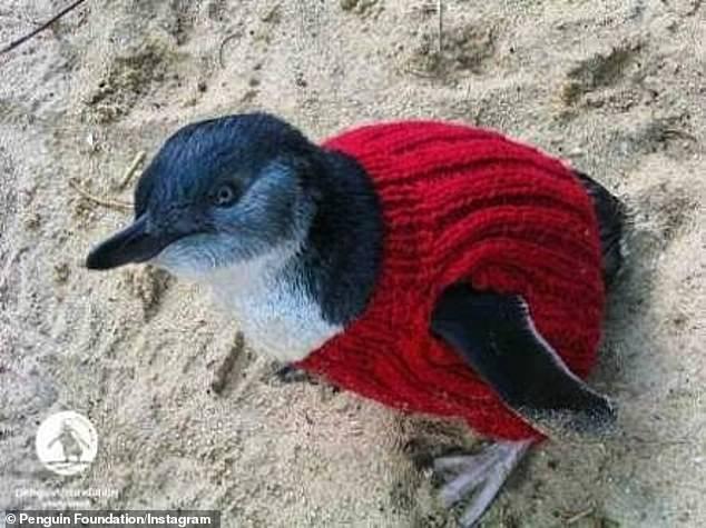 فراخوان بافت ژاکت برای پنگوئنها
