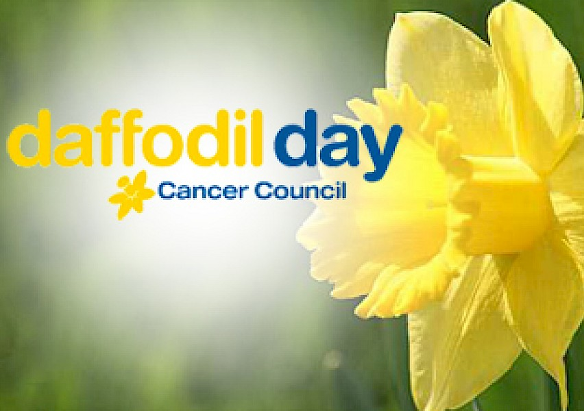 روز نرگس زرد روزی برای مبارزه با سرطان در استرالیا