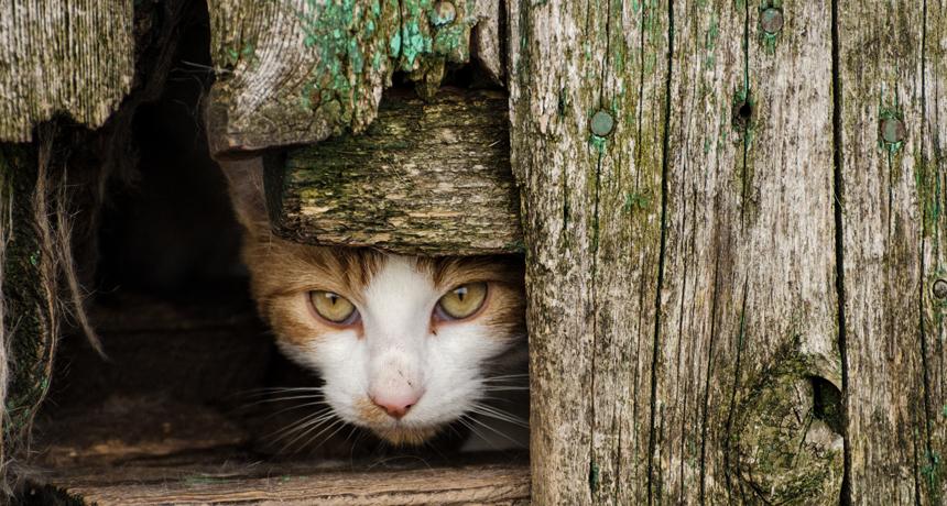 استرالیابه جنگ دو میلیون گربه خیابانی میرود