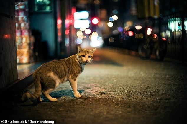 تغییر قوانین حیوانات خانگی؛ گربهها باید در خانه بمانند و سگها بازداشت میشوند