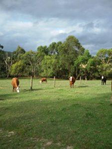 روند رو به رشد بازار کشاورزی ارگانیک استرالیا