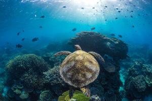 برندگان مسابقه سالانه عکاسی استرالیا