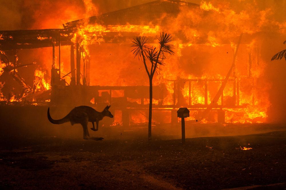سه میلیارد حیوان قربانی جنگل سوزیهای استرالیا