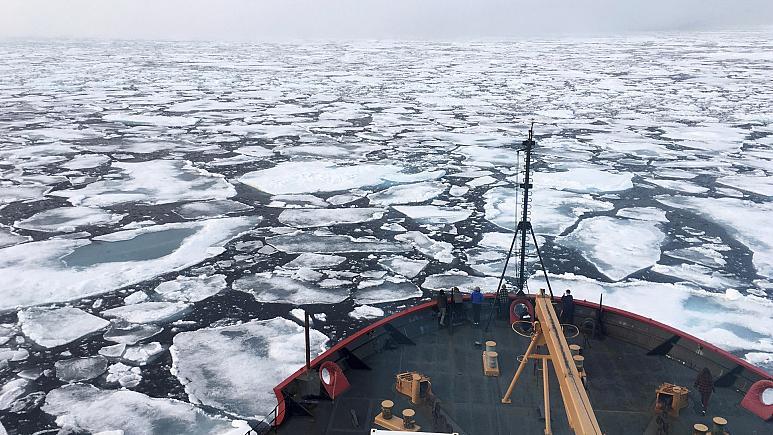 ویروس کرونا به قطب جنوب هم رسید