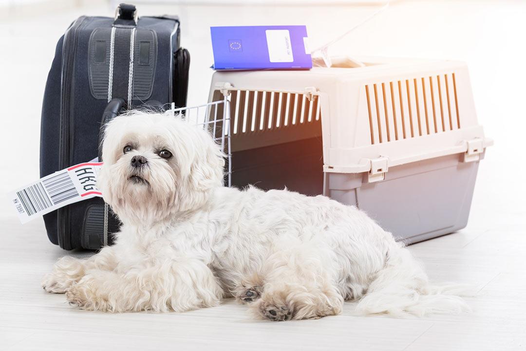 لطفا کمربند سگهایتان را ببندید؛ همراه بردن حیوانات به درون هواپیما در استرالیا آزاد میشود