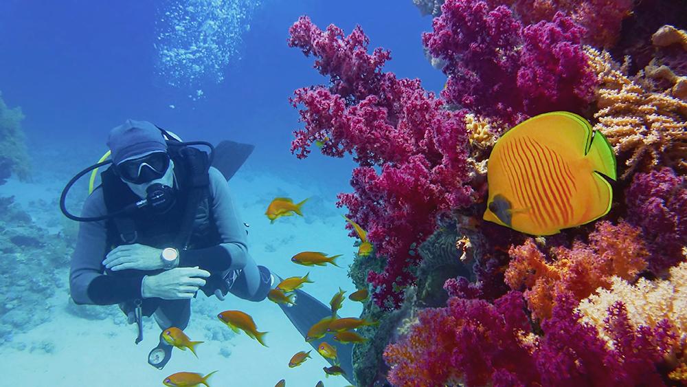 به رغم مخالفت استرالیا، یونسکو درباره قرار دادن سد بزرگ مرجانی در فهرست مکانهای طبیعی در معرض خطر تصمیم میگیرد