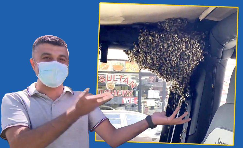 یک اتفاق عجیب؛ زنبورها در ده دقیقه یک ماشین را تصرف کردند