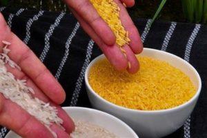 برنج تراریخته در بازار استرالیا و نیوزیلند مجوز گرفت