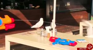 رستوران استرالیایی که مشتریان آن باید حتما تفنگ داشته باشند!