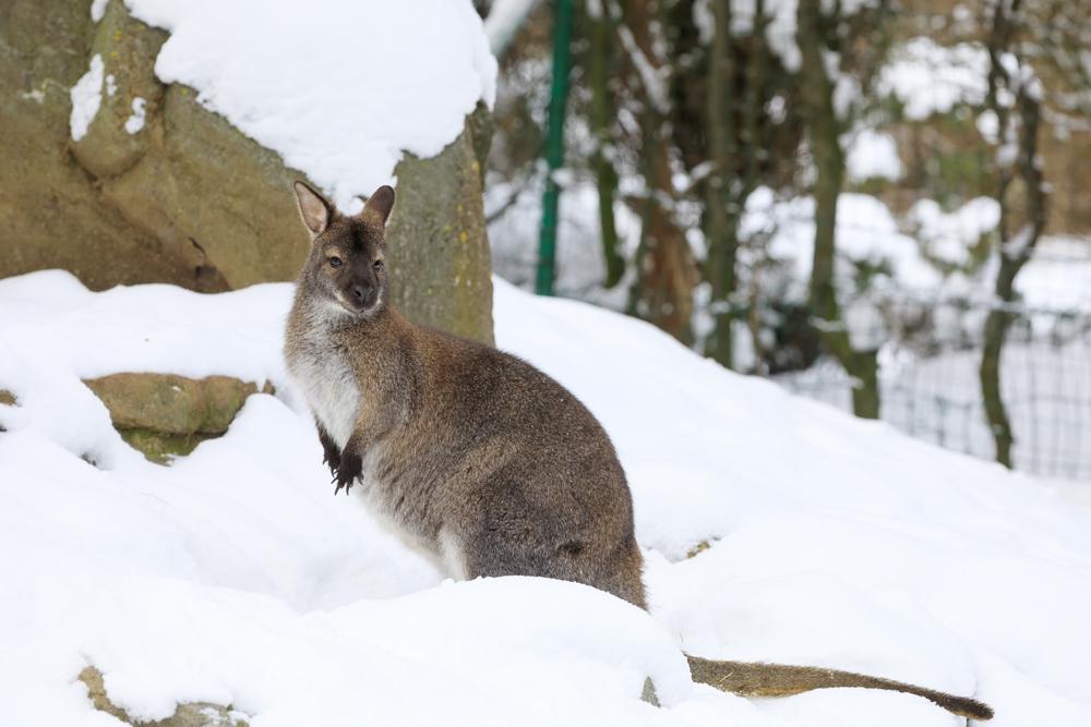 پیش بینی بارش برف در مناطق کوهستانی استرالیا