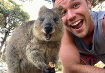 کوئوکا؛ شادترین حیوان جهان