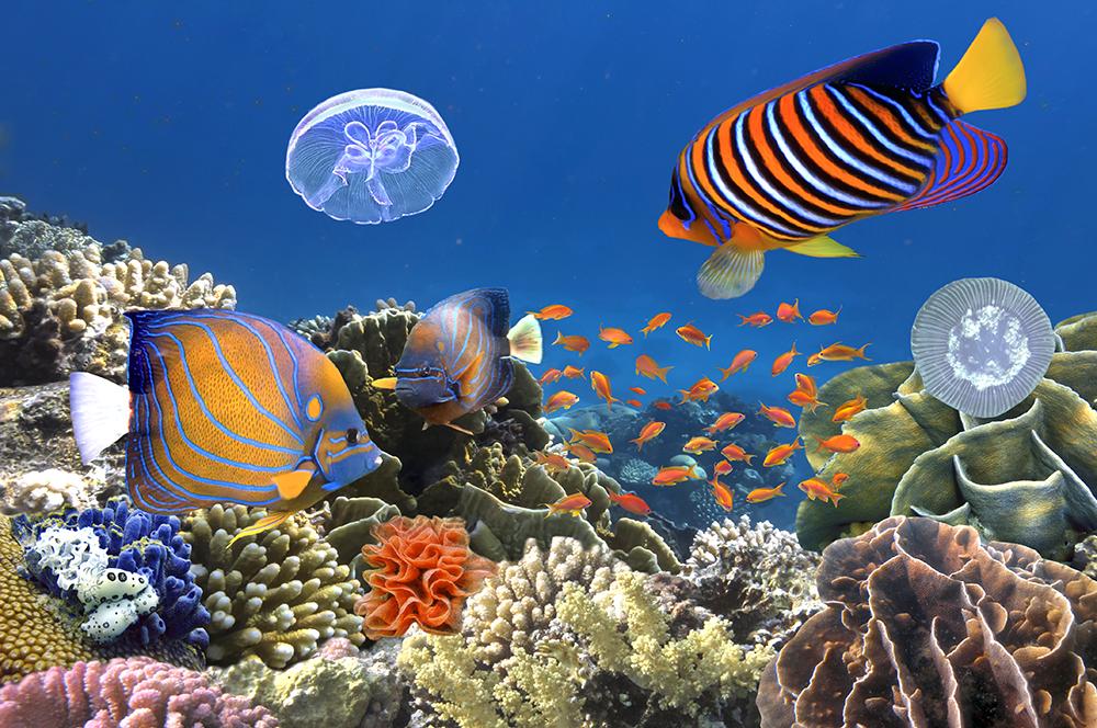 ترمیم صخرههای مرجانی استرالیا با گول زدن ماهیها!