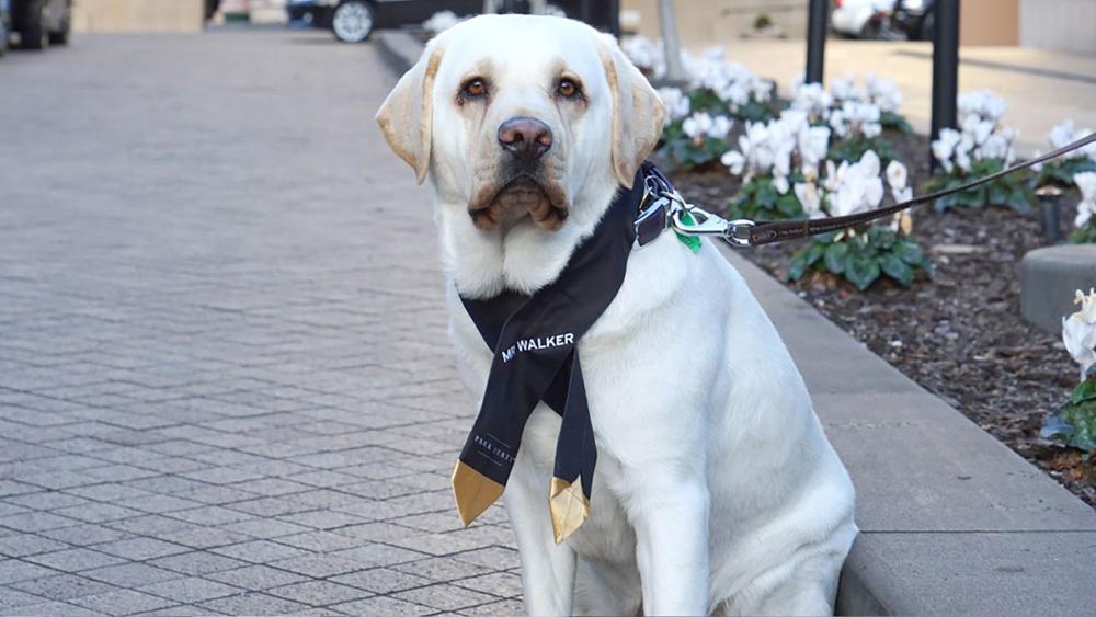 سگ وظیفه شناس محبوب ترین کارمند هتل پارک هایت ملبورن