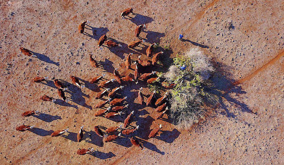 استرالیا در معرض وقوع بدترین خشکسالی نیم قرن گذشته