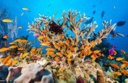 دیواره بزرگ مرجانی، یکی از بزرگ ترین عجایب طبیعی دنیا در استرالیا