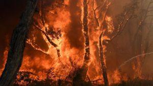 آتشسوزیهای گسترده در بیشههای شمال شرقی استرالیا